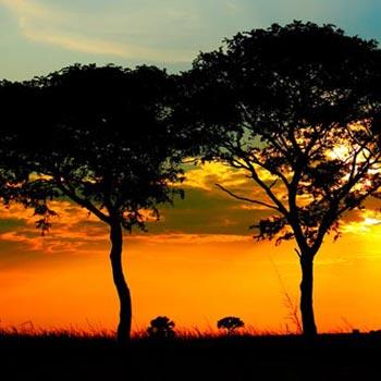 Uganda Express Safari Tour