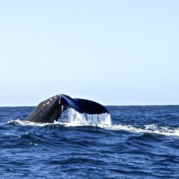 Whales & National Park – Economy Coach Tour