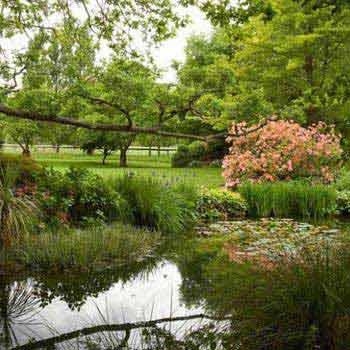 Rhododendron Gardens Tour