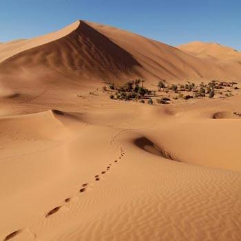Desert Sahara Sand Dunes in Agadir Tour