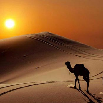 All Inclusive Morocco Desert Tour From Marrakesh