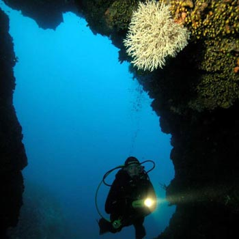 Discovery Dive Tour