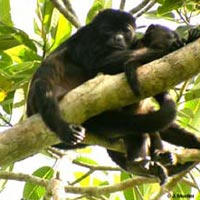 Natural Highlights of Panama Tour