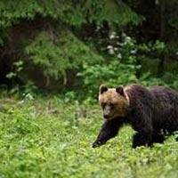 Bear Watching Tour