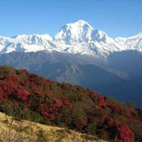 Ghorepni Poon Hill Trekking Package