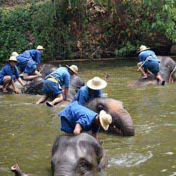 Lampang Mahout Training & Homestay Tour