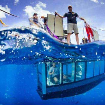 Ultimate Underwater Adventure with Great White Sharks Package