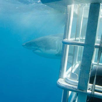 Two Days of Excitement Plus Great White Sharks and Sea Lions Package