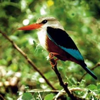 10 Day Bird Watch Round Trip Gambia Package