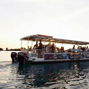 Moreton Bay Marine Encounter Package