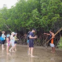Daintree Dreaming Day Tour with Ngadiku Dreamtime Walk