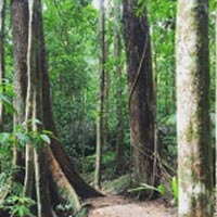 Daintree Dreaming Day Tour – Aboriginal Cultural Experience