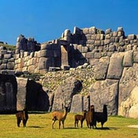 Cusco City Tour Package