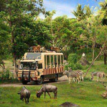 Bali Safari and Marine Park Package