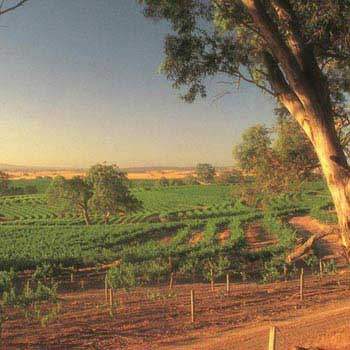 1 Day Barossa Valley Tour Package