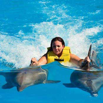 Adventure Beyond! Swim with Wild Dolphins Package