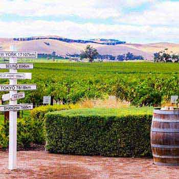 Barossa Valley or Mclaren Vale Wine Tasting Tours Package