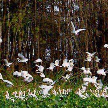 The Amazing Florida Bird Migration Tour