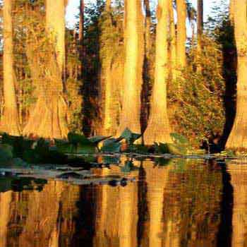 Discovering the Okefenokee Swamp and Cumberland Island Tour