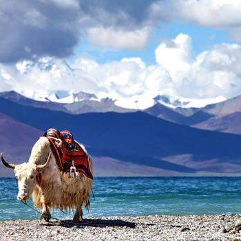 Lhasa Tour with Namtso Lake Package