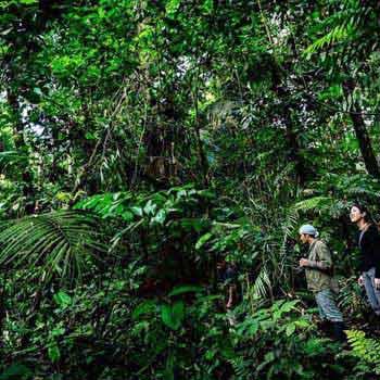 Amazon Jungle Safari Tour