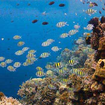 Diving Bunaken Package Package