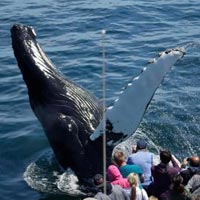 Whale Watching Package
