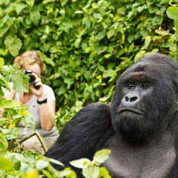 3 Days Uganda Gorilla Tracking Tour