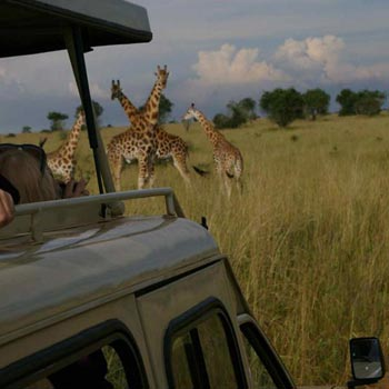 5 Days Murchison Falls & Queen Elizabeth Park Safari Tour