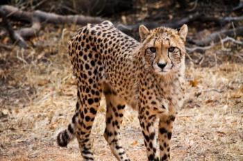 Ann Van Dyke Cheetah Centre Tour
