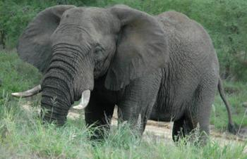 Kruger National Park Victoria Falls Safaris Package
