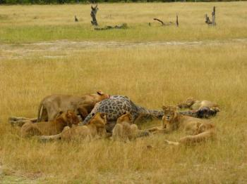 Chobe Safaris Package