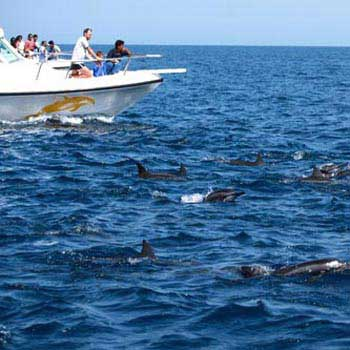 Muscat Dolphin Watching and Snorkeling Package