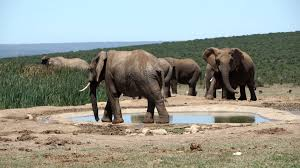Addo Elephant National Park Package