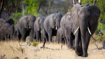 17 Days Botswana & Zimbabwe Wildlife Package