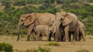 8 Days Cape to Addo Safari Package