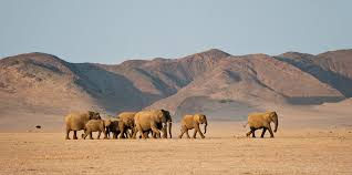11 Days Ultimate Namibia Wilderness Package