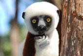 Madagascar North Adventure Tour