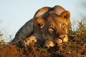 Cape Town, Johannesburg & Wildlife