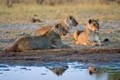 Falls & Wildlife of Zimbabwe