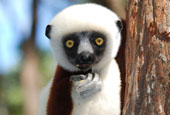 Madagascar North Adventure