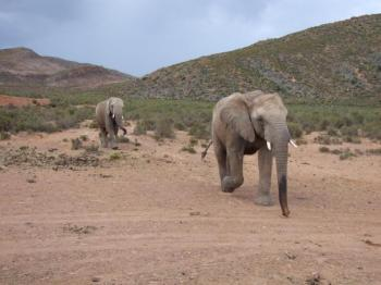 South Africa Self Drive Tour Package
