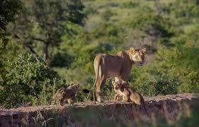 7 Day Kruger National Park Package