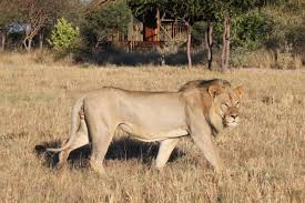 16 Day Botswana Wildlife Adventure Camping Safari Package