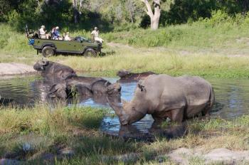 Kruger National Park 2 Days 1 Night Magical Safari from Johannesburg Package