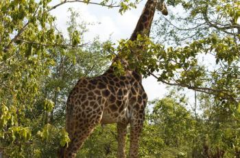 Kruger National Park 4 Days 3 Nights Magical Safari with Panaroma Tour Package