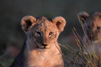 Pilanesberg National Park 2 Days 1 Night Magical Safari Package
