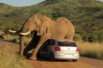 Pilanesberg National Park Safari Closed Vehicle Package
