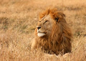 Lion Park Tour Package