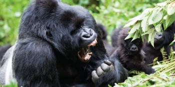 5 Days Incredible Rwanda Safari Package